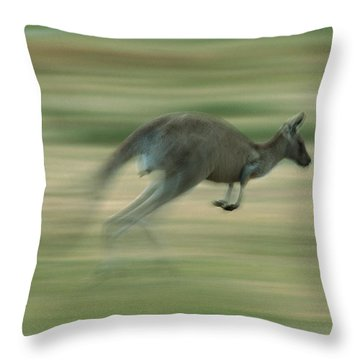 Eastern Grey Kangaroo Female Hopping Throw Pillow by Ingo Arndt