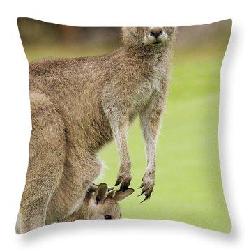 Eastern Grey Kangaroo With Joey Throw Pillow
