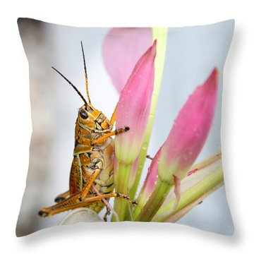 Eastern Lubber Throw Pillow