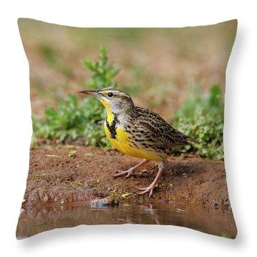 Meadowlark Throw Pillows