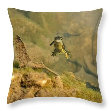 Eastern Newt In A Shallow Pool Of Water Throw Pillow by Chris Flees