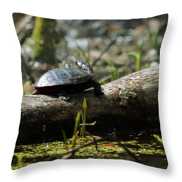 Eastern Painted Turtle Throw Pillow