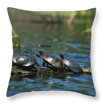Eastern Painted Turtles Throw Pillow