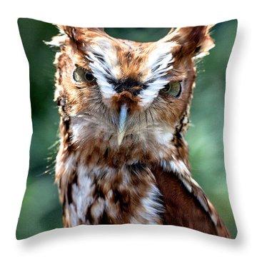 Eastern Screech-owl Throw Pillow