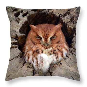 Eastern Screech Owl Throw Pillow by Kathy Baccari