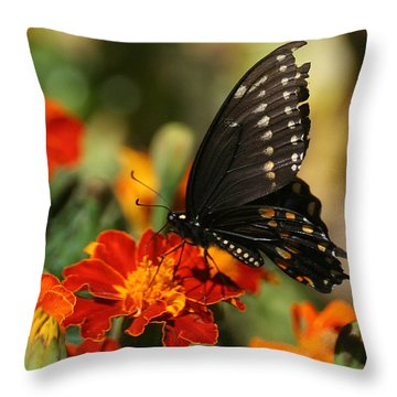 Eastern Swallowtail On Marigold Throw Pillow