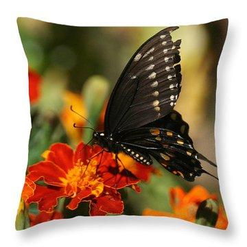 Eastern Swallowtail On Marigold Throw Pillow