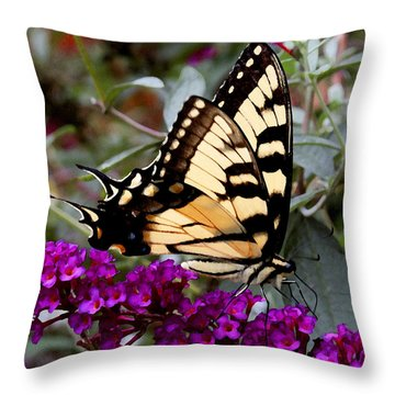 Throw Pillow featuring the photograph Eastern Tiger Butterfly by James C Thomas