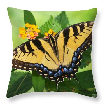 Eastern Tiger Swallowtail Butterfly Throw Pillow by Myrna Bradshaw