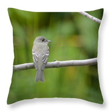 Eastern Wood Pewee Throw Pillow