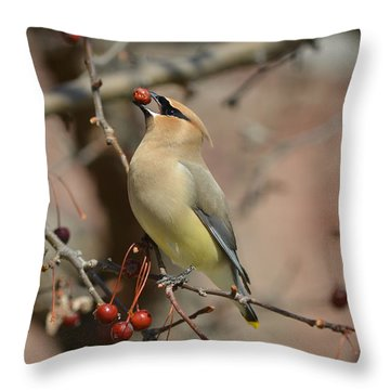 Cedar Waxwing In Winter Throw Pillow