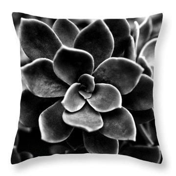 Echeveria Elegans Throw Pillow by Fabrizio Troiani
