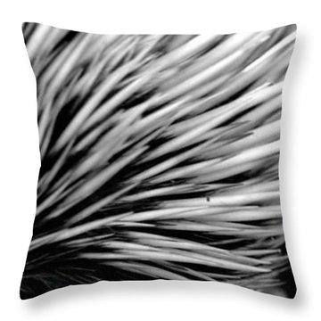 Throw Pillow featuring the photograph Echidna by Miroslava Jurcik