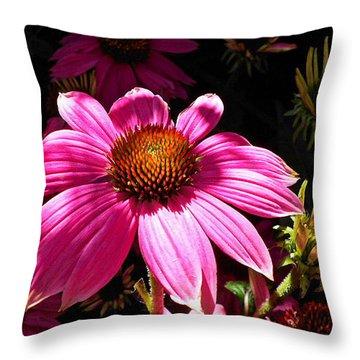 Echinacea Blooms Throw Pillow