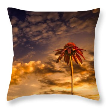 Echinacea Sunset Throw Pillow by Bob Orsillo