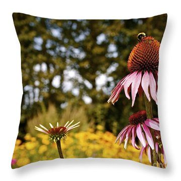Throw Pillow featuring the photograph Echinacea With Bee by Linda Bianic