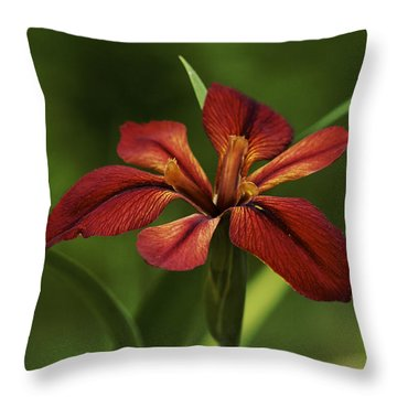 Throw Pillow featuring the photograph Echo - Copper Iris Art Print by Jane Eleanor Nicholas
