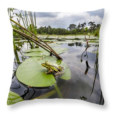 Edible Frog On Lily Pad Overijssel Throw Pillow