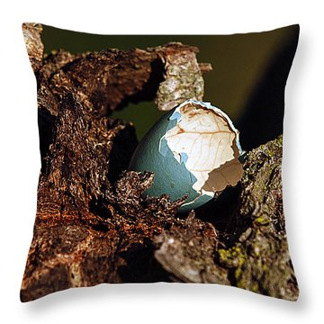 Eggs Of Nature 1 Throw Pillow by David Lester