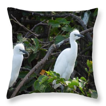 Egret Chicks Waiting To Be Fed Throw Pillow