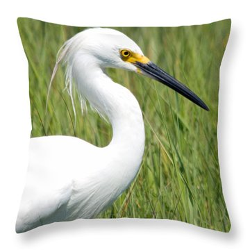 Throw Pillow featuring the photograph Egret In The Sound by Greg Graham