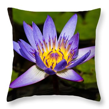Egyptian Blue Water Lily  Throw Pillow by Scott Carruthers