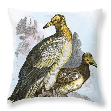 Egyptian Vulture Throw Pillow by English School
