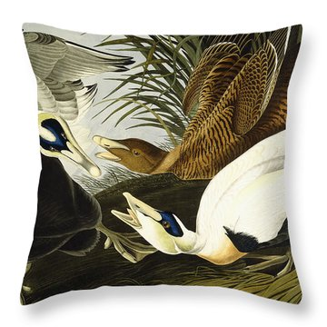Eider Ducks Throw Pillow by John James Audubon