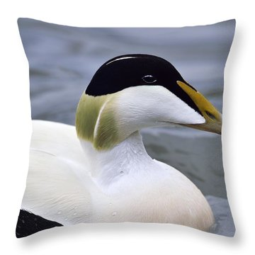 Eider Up Throw Pillow by Tony Beck