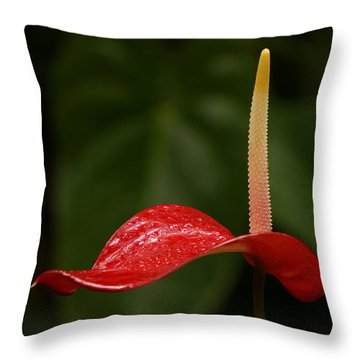 Throw Pillow featuring the photograph Elegance by Inge Riis McDonald