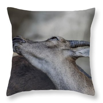 Elegance Of The Ibex Throw Pillow by Michelle Meenawong