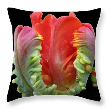 Elegant Throw Pillow by Arlene Carmel