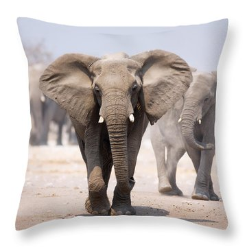 Elephant Bathing Throw Pillow
