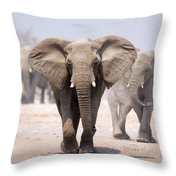 Elephant Bathing Throw Pillow