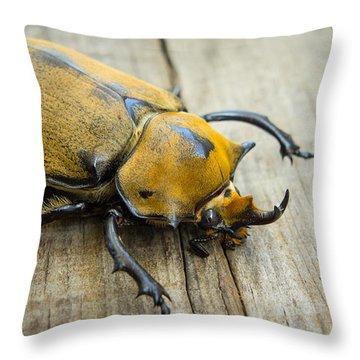Elephant Beetle Throw Pillow