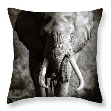 Elephant Bull Throw Pillow