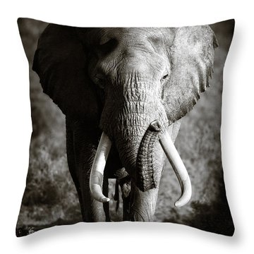Elephant Bull Throw Pillow