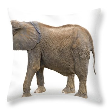 Throw Pillow featuring the photograph Elephant by Charles Beeler