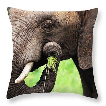 Elephant Eating Close-up Throw Pillow