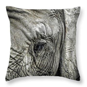 Elephant Throw Pillow by Elena Elisseeva