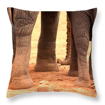 Throw Pillow featuring the photograph Elephant Family by Amanda Stadther