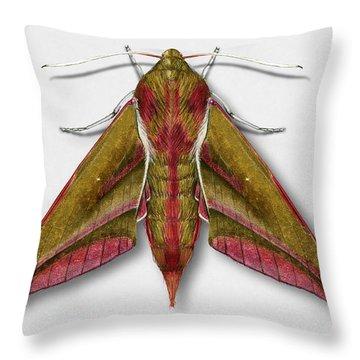 Elephant Hawk Moth Butterfly - Deilephila Elpenor Naturalistic Painting - Nettersheim Eifel Throw Pillow