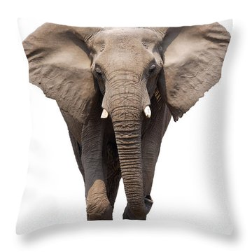Elephant Isolated Throw Pillow by Johan Swanepoel