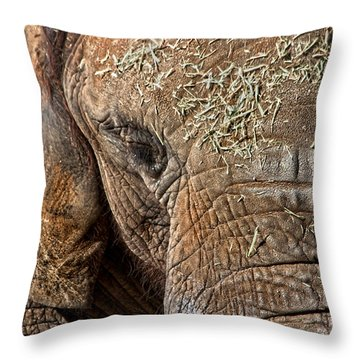 Elephant Never Forgets Throw Pillow