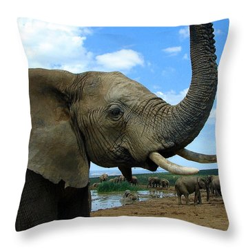 Elephant Posing Throw Pillow