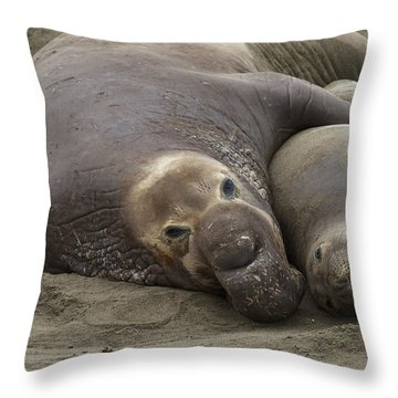 Elephant Seal Couple Throw Pillow by Duncan Selby