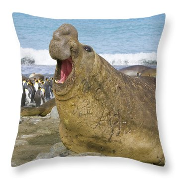 Elephant Seal Roaring Throw Pillow