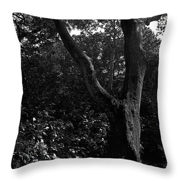 Throw Pillow featuring the photograph Elizabethan Gardens Tree In B And W by Greg Reed