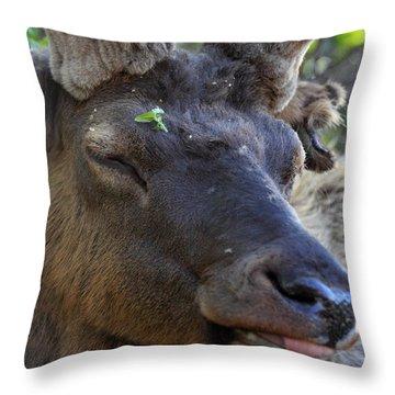 Elk Chuckle Throw Pillow