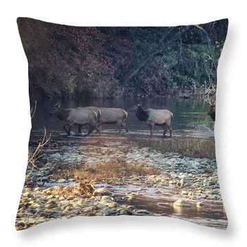 Elk Crossing The Buffalo River Throw Pillow